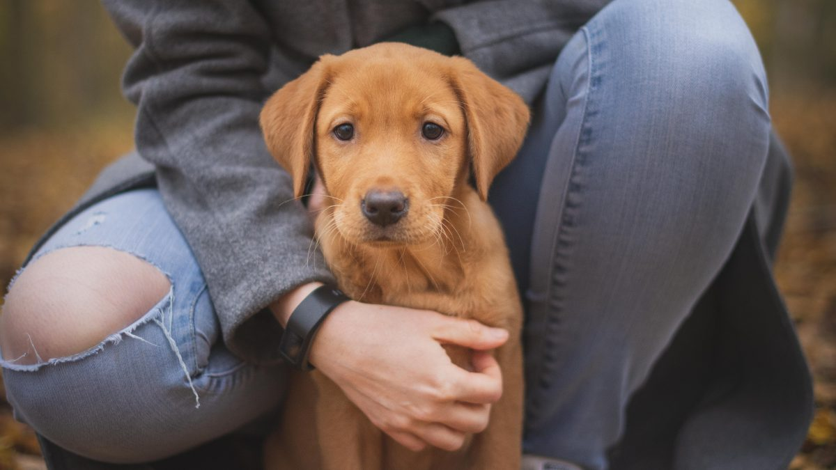 The British And Pets: Love Or Addiction?